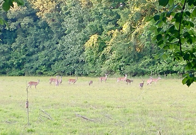 Group of deer in a meadow by our home, would have been easy to miss if I wasn't paying attention